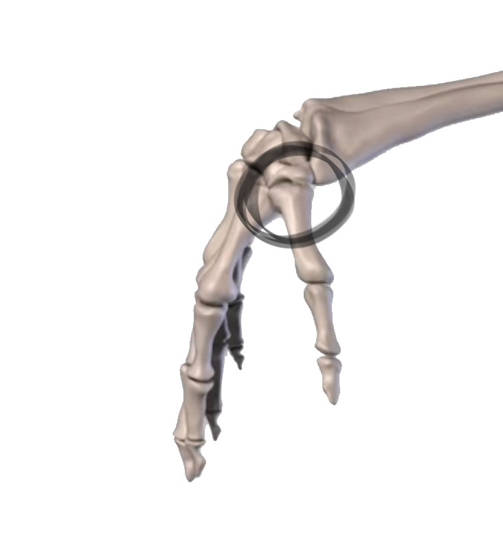 The saddle joint
